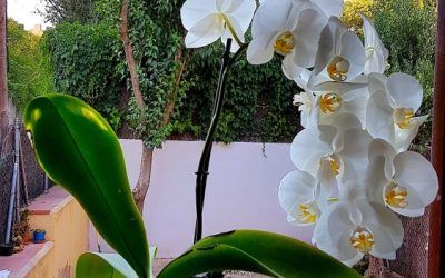 How I put together T.S. Eliot, Bill Watterson, my daughter and our happy orchid in a post